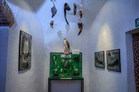 Museumsraum_FedernkundeBrutbiologie